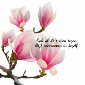 Blossoms 15x15 cm - Vak 118