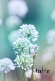 Blossoms - 113