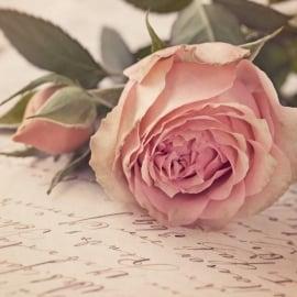 Blossoms postkaart - 121