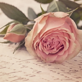 Blossoms 15x15 cm - Vak 121