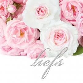 Blossoms 15x15 cm - Vak 132