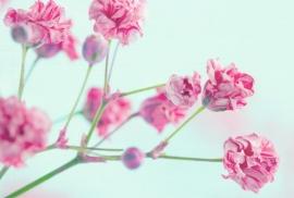 Floweressences - Vak 102