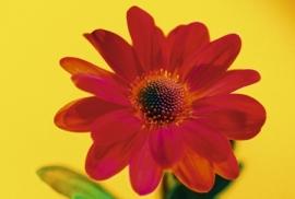 Jardin de Fleur - Vak 145
