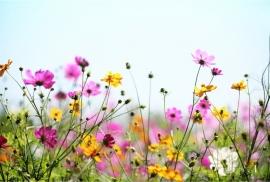 Floweressences - Vak 137