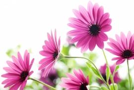 Floweressences - Vak 140