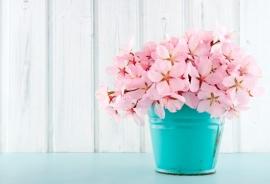 Blossoms - 124