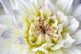 Jardin de Fleur - Vak 142