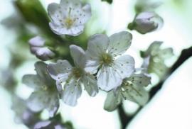 Jardin de Fleur - Vak 137