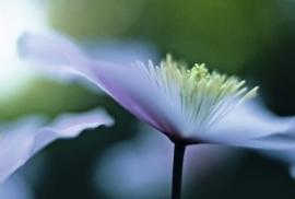 Jardin de Fleur - Vak 140