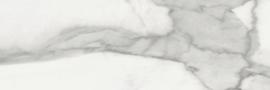 Invictus glans  20x60cm