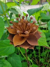 Rusty flower  263