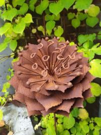 Rusty flower 265