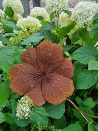 Rusty flower Malve