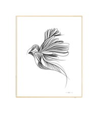 POSTER USE YOUR WINGS | STUDIO TOSCA