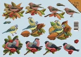 Uitdrukvel vogels