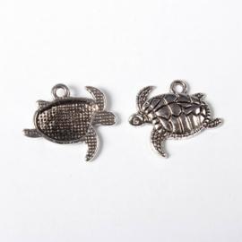 Tibetaanse bedel zeeschildpad
