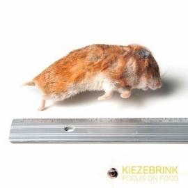 KB Syrische hamster mix 50-170 g, 1 kg