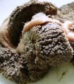 schapenpens  NIET GEMALEN 1 kg