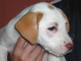 vlees voor Puppy 1-6 maanden 200 gr