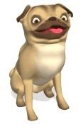Hond KVV