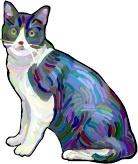 Brokken Kat
