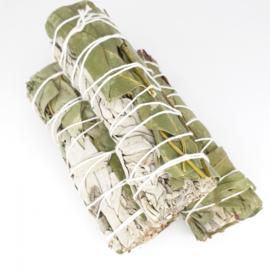Witte Salie met Eucalyptus Smudge Stick - 12 cm