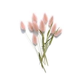 Lagurus roze (hazenstaart) mini set