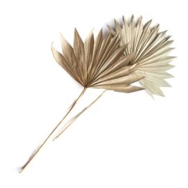 Palmblad 'Sun spear'