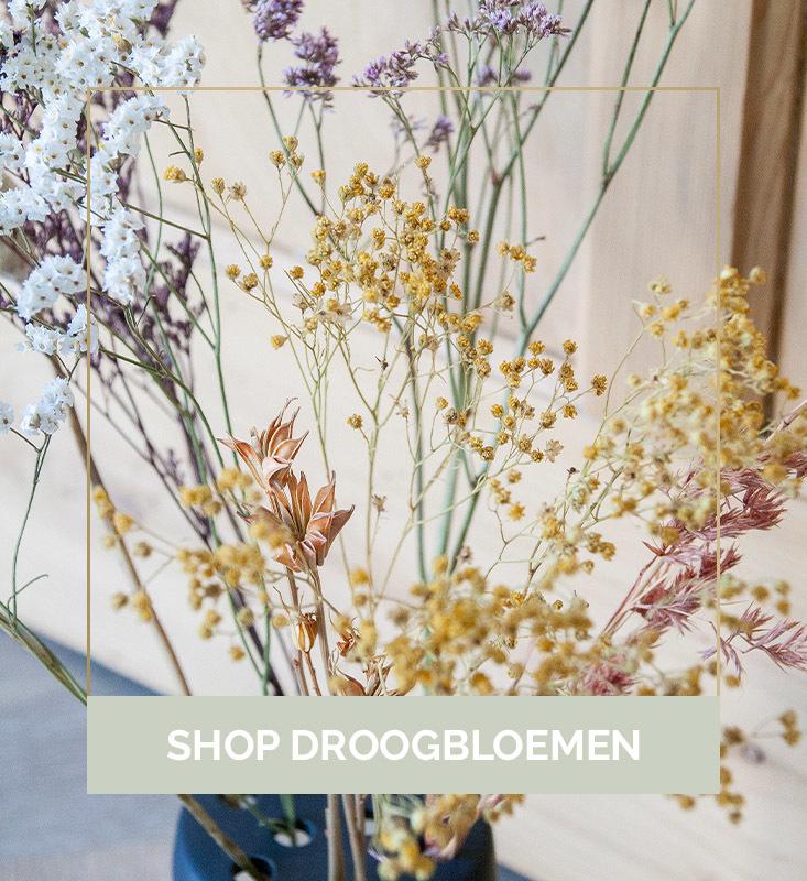Shop droogbloemen, droogbloemen webshop, droogbloemen online kopen | Nanaa's