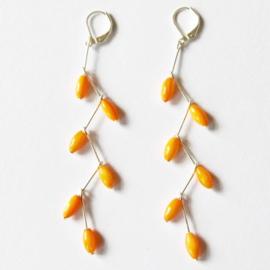 Apricot orange grapes