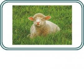 Überhosen Wolle