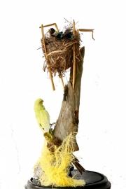 Antieke stolp met tropische vogels