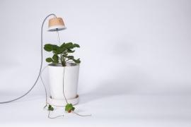 Ledlicht voor planten