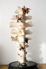 Antieke stolp met Giraffe wervels & vlinders