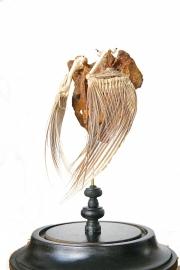 Stolp met antiek staartbeen