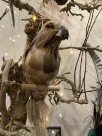 Papegaai naturel bruin, parrot