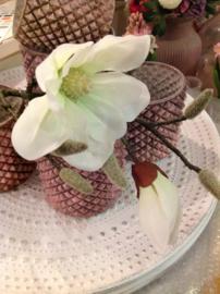 Magnolia wit met katjes