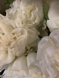 Bos pioenen wit