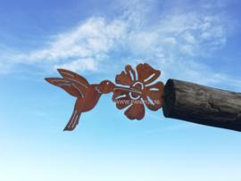 Kolibrie met bloem