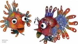 Medusa kogelvis  oranje