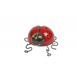 Medusa lieveheersbeestje -S-