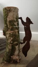 Kleine lopende eekhoorn
