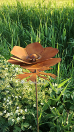Tuinsteker anemoon
