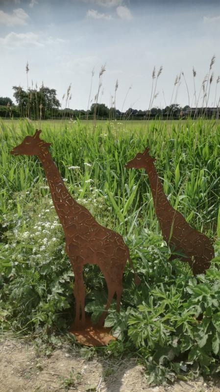 Giraf op plaat