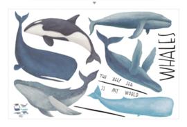 Muursticker walvis - bultrug - orka - potvis