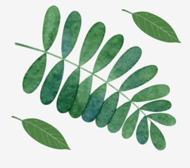 Muursticker blad groen lijsterbes interieurdecoratie sticker