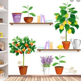 Muursticker bloempot fruitboom citroen / mandarijn planten