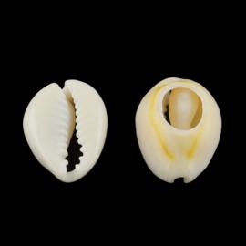 Kauri schelp beige
