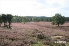 De Loenermark ( Natuurgebied )
