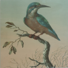 Print op hout 'Ijsvogel' 30x30cm, Pimpelmees